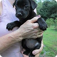 Adopt A Pet :: Maya - Brookside, NJ