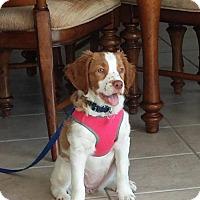 Adopt A Pet :: FL/Charlotte (Adoption Pending) - Mount Dora, FL
