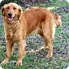 Adopt A Pet :: SAPPHIRE