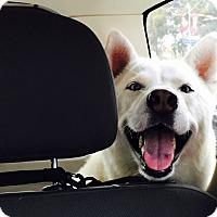 Adopt A Pet :: Una - Marina del Rey, CA