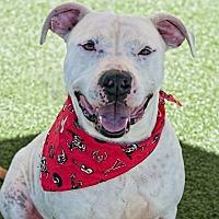 Adopt A Pet :: Bruce - Salisbury, NC