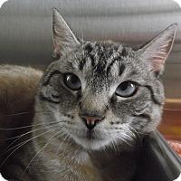 Adopt A Pet :: Frankie - Chambersburg, PA