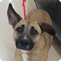 Adopt A Pet :: Annie - Sweet & Smart! - Olive Branch, MS
