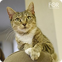 Adopt A Pet :: Pinkie Pie - Homewood, AL