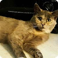 Adopt A Pet :: Charlie Rose - Roscoe, NY