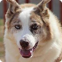 Adopt A Pet :: Courage - Colorado Springs, CO
