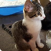 Adopt A Pet :: Carter (JT) - Little Falls, NJ