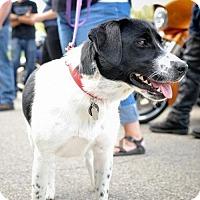 Adopt A Pet :: Milly - Princeton, MN