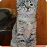 Adopt A Pet :: Ai Litter - Annie - Williamston, MI