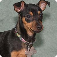 Adopt A Pet :: Angel - Elmwood Park, NJ