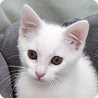 Adopt A Pet :: Norman - Redondo Beach, CA