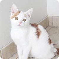 Adopt A Pet :: Gilbert C160389 - Edina, MN