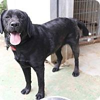 Adopt A Pet :: Brooke - Litchfield Park, AZ