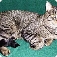 Adopt A Pet :: Hoss - Watauga, TX