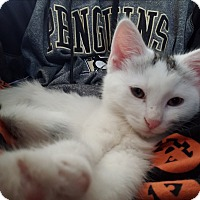 Adopt A Pet :: Mercury - Greensburg, PA