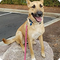 Shepherd (Unknown Type) Mix Dog for adoption in Cary, North Carolina - Katrina