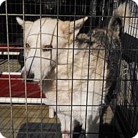Adopt A Pet :: Badger - Jamestown, TN