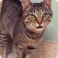Adopt A Pet :: Dudley - Hinsdale, IL