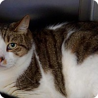 Adopt A Pet :: Squirt - Scituate, MA
