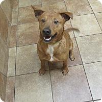 Adopt A Pet :: Daxton *Petsmart GB* - Appleton, WI