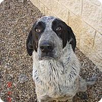 Adopt A Pet :: Comet - Stilwell, OK