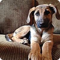 Adopt A Pet :: Ami - Homewood, AL