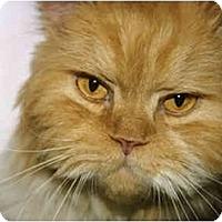 Adopt A Pet :: Romulus - Davis, CA