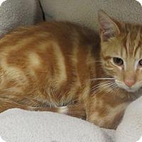 Adopt A Pet :: Cameron - Brockton, MA