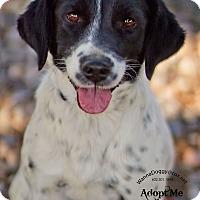 Adopt A Pet :: Myla - Phoenix, AZ