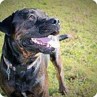 Adopt A Pet :: Dexter - Plant City, FL