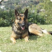 Adopt A Pet :: Ginger - Laguna Niguel, CA