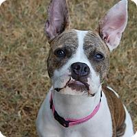 Adopt A Pet :: Buttercup - Austin, TX