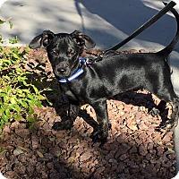 Adopt A Pet :: Drake - Las Vegas, NV