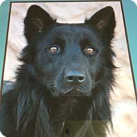 Adopt A Pet :: COLUMBUS VON CLAUS - Los Angeles, CA