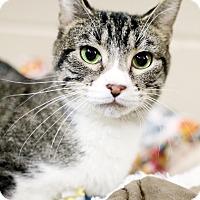 Adopt A Pet :: Thirteen - Appleton, WI