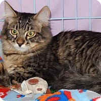 Adopt A Pet :: Puff - Walnut Creek, CA
