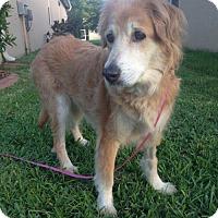 Adopt A Pet :: Esther 656 - Naples, FL