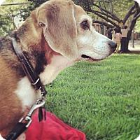 Adopt A Pet :: Donald Courtesy Listing - Sparta, NJ