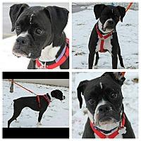 Adopt A Pet :: Kayla - Garden City, MI