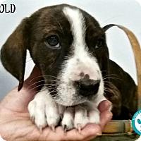 Adopt A Pet :: Harold - Kimberton, PA