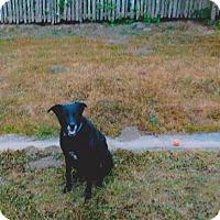 Adopt A Pet :: Charlie - Arcata, CA