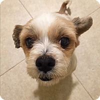 Adopt A Pet :: Bella 2nd - Santa Ana, CA