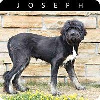 Adopt A Pet :: JOSEPH - Toronto, ON
