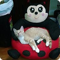 Adopt A Pet :: Bisquick - Trevose, PA