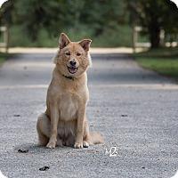 Adopt A Pet :: Sadie - Daleville, AL