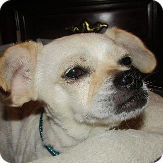 Chihuahua/Pekingese Mix Dog for adoption in Richmond, Virginia - Sadie