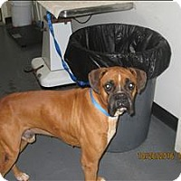 Adopt A Pet :: 16-10-3221 Tyson - Dallas, GA