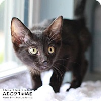 Adopt A Pet :: Betsy - Edwardsville, IL