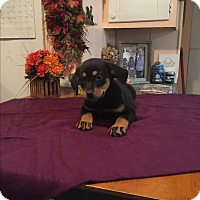 Adopt A Pet :: Elsa - Kittery, ME