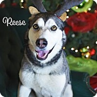 Adopt A Pet :: Reese - Gulfport, MS